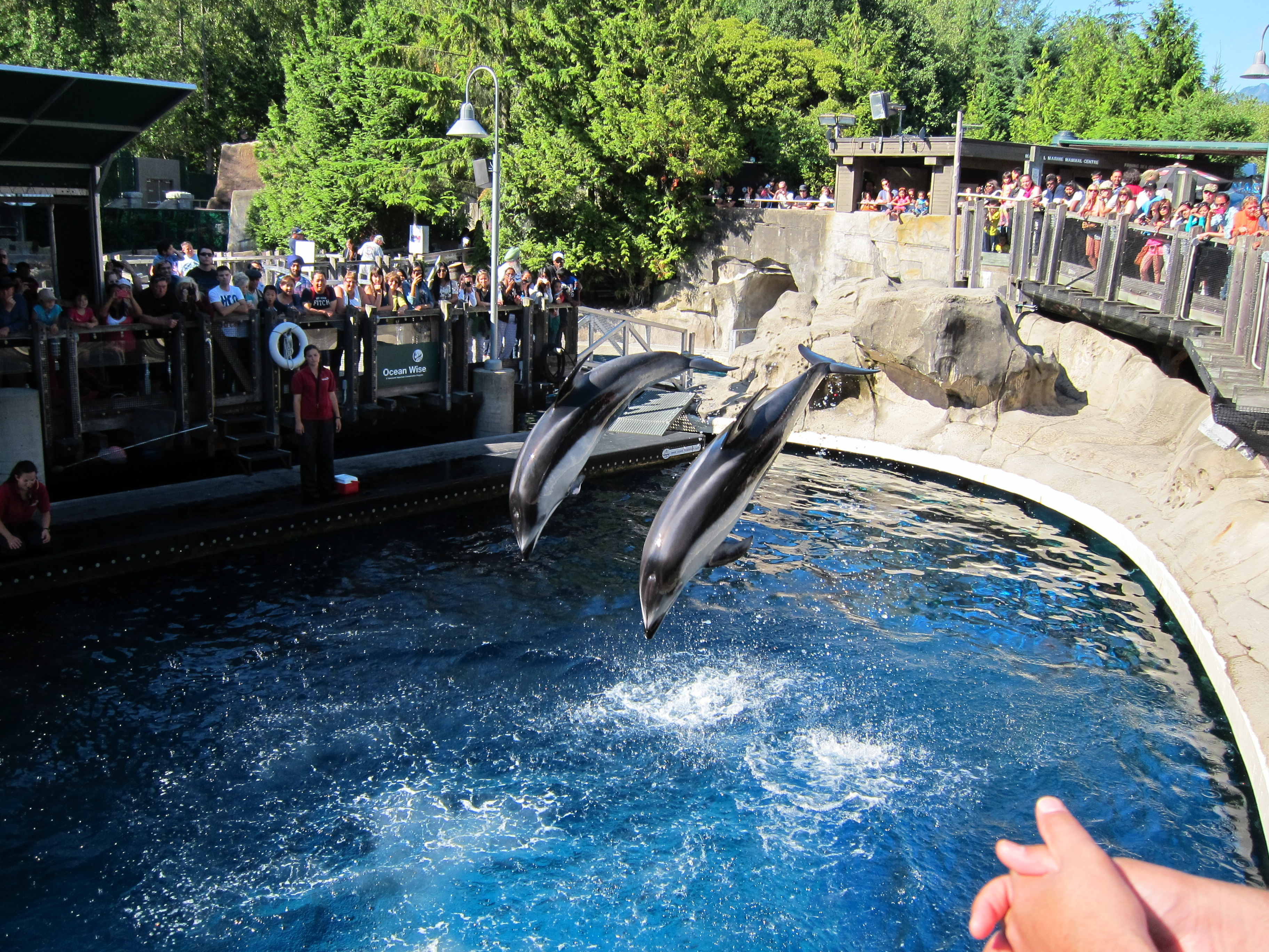 The Vancouver Aquarium Torn Between The Good And The Bad